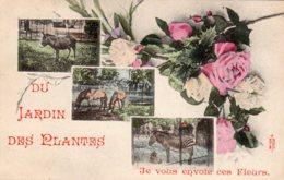 CPA   75   PARIS   DU JARDIN DES PLANTES JE VOUS ENVOIE CES FLEURS---1907 - Parcs, Jardins