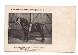 Exposition Belgique 1900.Concours Hippique. Spirou. Etalon Ardennais. - Chevaux