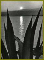 CPSM-photo Véritable édit.SEPT 0-19- La Cote D'Azur-coucher De Soleil - Contre La Lumière