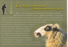 LA LEGEND DES MOUTONS A LUNETTES NOITRES DU QUERCY. MODERN - Animals