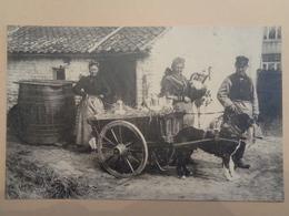 Laitière Flamande - Agriculture