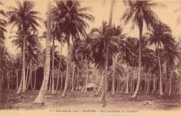ILES SOUS LE VENT RAIATEA UN PLANTATION DE COCOTIERS - French Polynesia