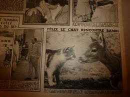 1952 RADAR: Amour D'un Chat Pour Un Fan;Vietminh à N'Ghialo;Le Carburant-bille;Catastrophe à Harrow;Technique Du KO ;etc - Zeitungen