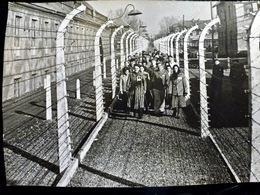 PHOTO Foto WW2 WWII 17.7x12.7 Cm : HOLOCAUST _ LIBERATION Camp AUSCHWITZ Par ARMEE ROUGE - JANVIER 1945 - Krieg, Militär