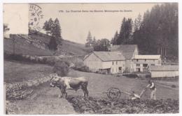La Charrue (tirée Par Un Attelage De Boeufs) Dans Les Hautes Montagnes Du Doubs Circ 1904, Timbre Arraché Avec Amincisse - France