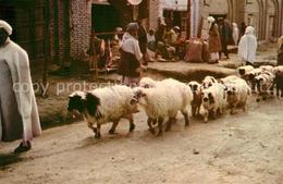 73078286 Afghanistan Schafherde In Kandahar - Afghanistan