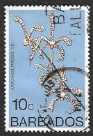 BARBADES 1974  -  YT  379  - Araignée  - Arachnis Maggie Oei -  Oblitéré - Barbades (1966-...)