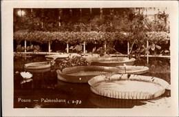 ! Alte Fotokarte, Photo, Posen, Poznan, Palmenhaus, 1933 - Polen