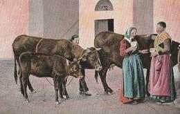 Cartolina - Postcard / Non Viaggiata - Unsent / Costumi Di Napoli - Venditrice Di Latte - Costumes