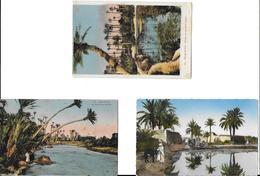 Afrique >  ALGERIE Paysages Du Sud  (palmiers Scènes & Types) Lot De 3 Cartes Cpsm/cpa-scan R/V Des 3 Cartes *PRIX FIXE - Scenes