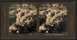 Stereoview Photographs / Stereoview Card / Femmes / Women / Japan / Tokio / Ed. A.G. Steglitz - Berlin - Stereoscopes - Side-by-side Viewers