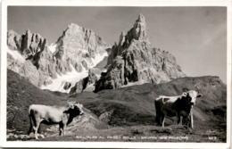 Sull'Alpe Al Passo Rolle - Gruppo Delle Pale (62-3) * 20. 7. 1932 - Italien