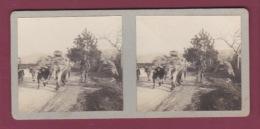 081018 - PHOTO STEREO - 74 Route Des Ollières - Paire De Boeufs Déménagement - Altri Comuni