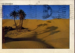 Le Sahara - Hammamet - Formato Grande Viaggiata – E 7 - Cartoline