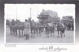 EN LA META CON ORGULLO. ANTIGUA FOTO ROIL (1934). RIO GALLEGOS. INSTANTES PATAGONICOS. CIRCA 2010s- BLEUP - Argentinië