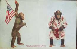 O)1920 UNITED STATES - USA, ZOOLOGICAL PARK-CHIMPANZEE BALDY -PATRIOTIC. XF - Other
