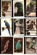 Bird Postcards Lot 10 Pc Different Types & Species - Birds
