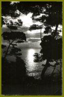 CP Photo Véritable- MAR-351-la  Mediterranée-Coucher De Soleil - Contre La Lumière