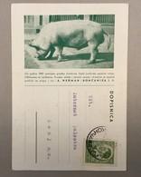 CARTE POSTALE   ILLUSTRATED    KONCANICA  KONČANICA   1940. - 1931-1941 Königreich Jugoslawien