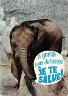 Romanèche Thorins Zoo éléphant Canton La Chapelle De Guinchay . - France