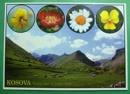 Flora At Mountain KORITNIK Near PRIZREN, Kosovo (Serbia) New Postcards. - Kosovo