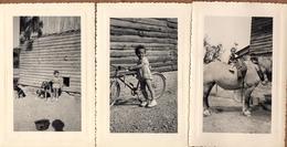 3 Photos Originales De Alain Dans L'Aube à Pel-et-Der (10500) En Juillet 1952 - Vélo, Chiens, Cheval à La Ferme - Personnes Identifiées