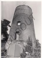 Buggenhout MOLEN / MOULIN -Originele Foto Jaren '70 ( A.Carre) 71 - Buggenhout
