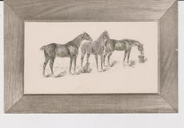 CHEVAUX . GAUFREE . MARY MILL . CARTE ANCIENNE . - Animals
