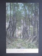 CP BELGIQUE (M1818) PUERS PUURS (2 VUES) Pollepeldreef - Allée 1913 - Puurs