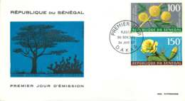 1967- Mimosa, Figuier De Barbarie  - Poste Aérienne- FDC - Senegal (1960-...)