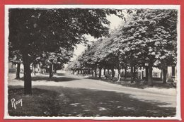 44 - PAIMBOEUF -- Boulevard Dumesnildot - Paimboeuf