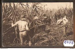 2475 AK/PC/CPA ANTILLES TRINITAD  AGRICULTURE PAYSANS CANNES A SUCRES  NC TTB - Trinidad