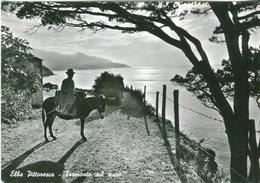 Elba Pittoresca. Tramonto Sul Mare - Lot.2386 - Livorno