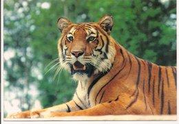 L20G277 - Parc De St Vrain - Essone - Le Tigre - MSM - Tigers