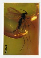 "Insecto ""mosquito"" Fósil En ámbar. Perteneciente A La Família Sciaridae. Found In Lithuania. Amber World. - Fósiles"