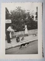 Nice. 1951. Les Chats Errants. 7x10 Cm. Rue Andrioli - Lieux