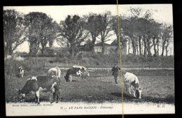 Au Pays Basque: Pâturage - Elevage