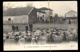 Types Basque: Un Troupeau De Moutons - Elevage