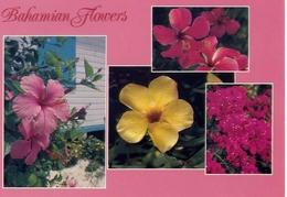 Bahamian Flowers - Formato Grande Non Viaggiata - E 7 - Cartoline