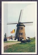 Oost-Vlaanderen - Beveren-Waas - Doel - De Molen. - Beveren-Waas