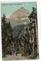 1 Postcard Argentina Rep. Arg. Bosque En La Cordillera - Argentine