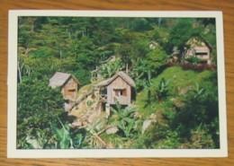 CPA 243 Carte Postale Madagascar Domaine Nature Ranomafana - Postcards