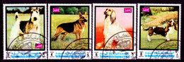 Yemen-0015 - Cani (o) Used - Senza Difetti Occulti. - Yemen