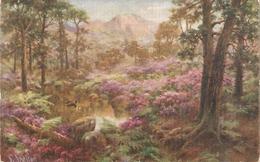 """A. Shelton.Woodland Walks"" Tuck =ilette PC # 3602 - Tuck, Raphael"