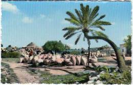 Cpsm Tunisie, Djerba, Poteries à Guellala - Tunisie