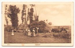 Fenaison - Cultures