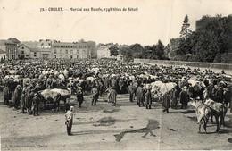 49. CPA. CHOLET. Marché Aux Boeufs, 1748 Têtes De Bétail.1914. - Foires