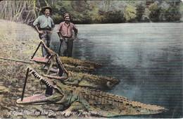 POSTAL DE PANAMA DE A GOOD HUNT ON THE BAYANO RIVER - COCODRILO- CROCODILE - Panamá