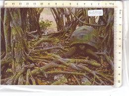 PO7933D# SEYCHELLES - ALDABRA ISLAND - TARTARUGHE - GIANT TORTOISE  VG - Seychelles