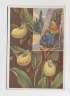 SABOTS DE LA VIERGE - Fleurs Des Alpes - Illustration - Cartes Postales